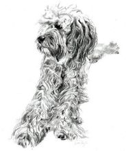 A4 Dog Portrait Drawing